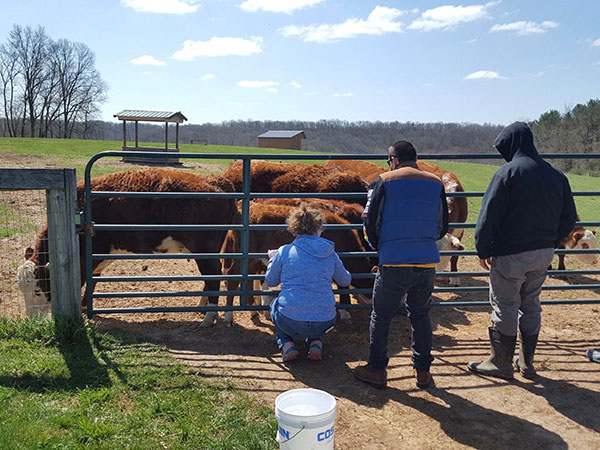 the-restoration-farm-600x450-day-program-cattle