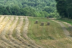 the-restoration-farm-600x450-haying-the-fields